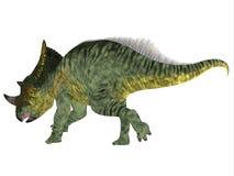 De Staart van de Brachyceratopsdinosaurus Stock Foto