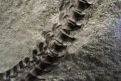 De Staart van de dinosaurus stock afbeelding
