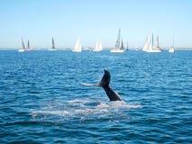 De staart van de gebocheldewalvis en varende boot Stock Fotografie