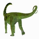 De Staart van de Puertasaurusdinosaurus Royalty-vrije Stock Foto's