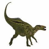 De Staart van de Shantungosaurusdinosaurus Royalty-vrije Stock Fotografie