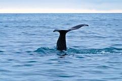De Staart van de walvis Stock Foto