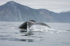 De staart van de walvis Stock Afbeeldingen