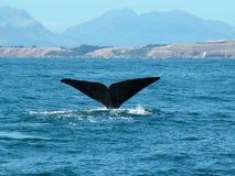 De staart van de walvis Royalty-vrije Stock Foto's