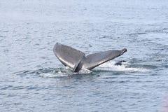 De staart van de walvis royalty-vrije stock afbeelding