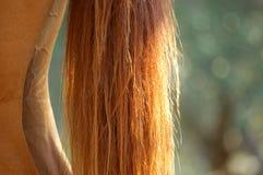 De staart van een paard. Royalty-vrije Stock Foto