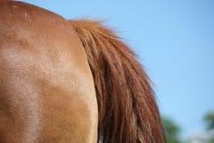 De staart van het paard Royalty-vrije Stock Foto