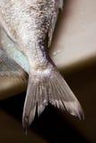 De staart van vissen Stock Foto's