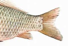 De staart van vissen Royalty-vrije Stock Afbeelding