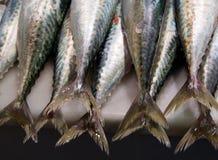 De staarten van vissen Royalty-vrije Stock Foto