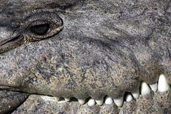 De staats nationaal park Florida de V.S. van de krokodil everglades Stock Afbeeldingen