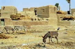 De stad van de ezel, Sirimou, Mali stock foto's