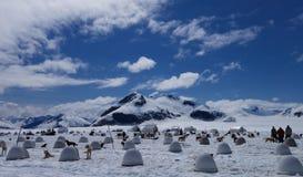 De Stad van de gletsjerhond Stock Foto