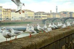 De stad van Florence met historische architectuur, Italië stock fotografie