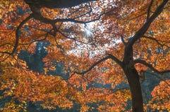De Stad van Lushanguling in de Herfst Stock Fotografie