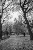 De Stad van New York - Central Park in autum - Zwart-wit beeld royalty-vrije stock afbeeldingen