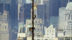 De Stad van New York heeft de hoogste dichtheid van nestelende wilde peregrine valk De V.S. royalty-vrije stock foto