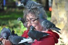 De stad van New York, mens met duiven Royalty-vrije Stock Foto's