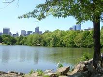 De Stad van New York van het Meer van de Schildpad van het Central Park. Stock Afbeelding