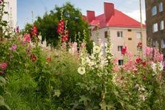 De stad wordt gesmoord in bloemen Stock Afbeeldingen