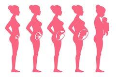 De stadia van de foetuszwangerschap Vrouwelijke zwangere het opvoeren en bevallings vectorillustratie Stock Foto's
