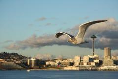 De stadsmening van Seattle met Ruimtenaald en zeemeeuw (seafow, zeevogel) royalty-vrije stock foto's