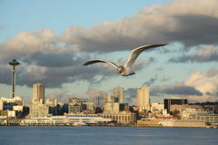 De stadsmening van Seattle met Ruimtenaald en zeemeeuw (seafow, zeevogel) stock foto's