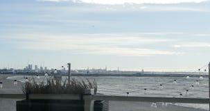 De stadsmening van Tallinn over de achtergrond stock footage