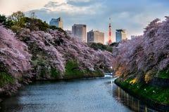 De stadsmening van Tokyo met sakura Stock Foto