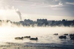 De stadsochtend en eenden die van de mistmist in nevelige rivier zwemmen royalty-vrije stock afbeelding
