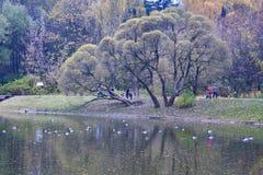 De stadspark van Moskou Stock Foto's
