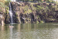 De stadspark van Ribeiraopreto, akadr. Luis Carlos Raya Royalty-vrije Stock Afbeeldingen