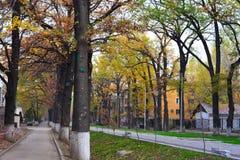 De stadsstraten van Alma Ata Royalty-vrije Stock Fotografie