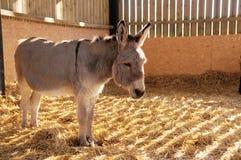 De Stal van de ezel royalty-vrije stock afbeelding