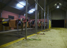 De stal van paardenrennen Stock Fotografie