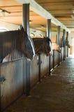 De stallen van het paard royalty-vrije stock foto's