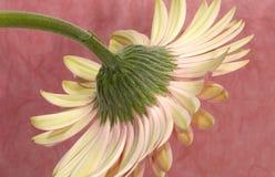 De Stam van de bloem Royalty-vrije Stock Afbeelding