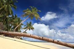 De stam van de palm op tropisch paradijsstrand Stock Foto