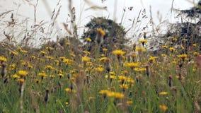 De stammen van gras en wildflowers slingeren in de wind stock footage