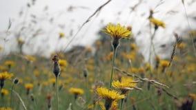 De stammen van gras en wildflowers slingeren in de wind stock videobeelden