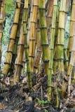 De stammen van het bamboe royalty-vrije stock foto's