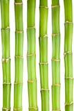 De stammen van het bamboe Stock Afbeelding