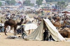 De stammenmensen treffen aan veemarkt voorbereidingen in nomadisch kamp, kameelmela in Pushkar, India Stock Foto's