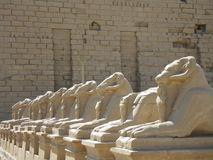 De standbeelden van de ram bij Karnak Tempel, Luxor/Egypte Stock Fotografie