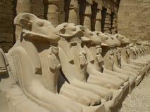 De standbeelden van de ram bij Karnak Tempel, Luxor/Egypte Royalty-vrije Stock Foto's