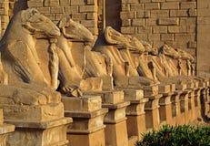 De standbeelden van Egypte van sfinx in karnaktempel Royalty-vrije Stock Foto's