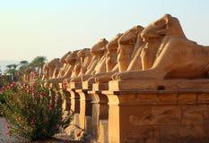 De standbeelden van Egypte van sfinx in karnaktempel Stock Afbeelding