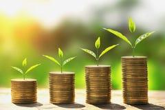 de stap van de geldstapel met installatie het groeien op muntstukken het concept financiert stock foto's