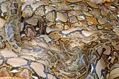 De stapel van de python Stock Afbeeldingen