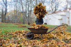 De stapel van de vrouwengreep van de droge herfst gaat dichtbij kruiwagen weg Royalty-vrije Stock Afbeelding